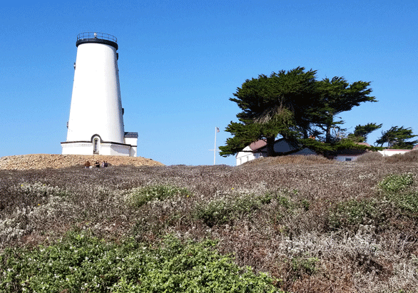 Lighthouses, Coastal Dunes, and Monarch Butterflies